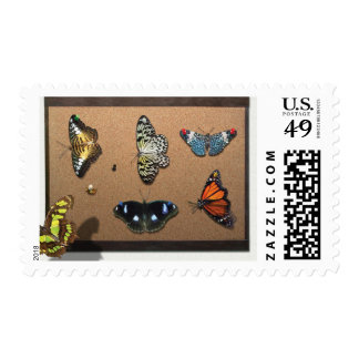 Lepidopterist - My Butterfly Collection Postage Stamp