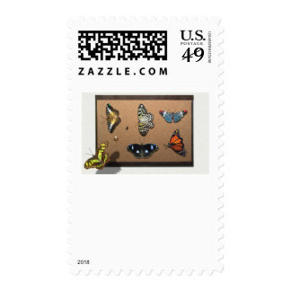 Lepidopterist - My Butterfly Collection Stamps
