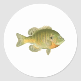 Lepomis macrochirus femenino - brema - Sunfish Pegatina Redonda