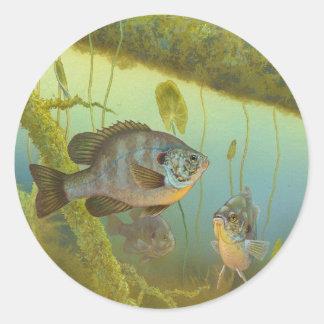 Lepomis Microlophus Timothy Knepp del Sunfish de Pegatina Redonda