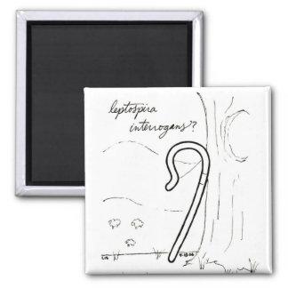 Leptospira Interrogans magnet