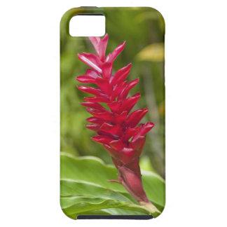 Les Fidji, île de Viti Levu. Fleur Funda Para iPhone 5 Tough