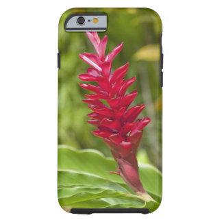 Les Fidji, île de Viti Levu. Fleur Funda De iPhone 6 Tough