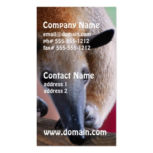 Lesser Anteater Business Cards