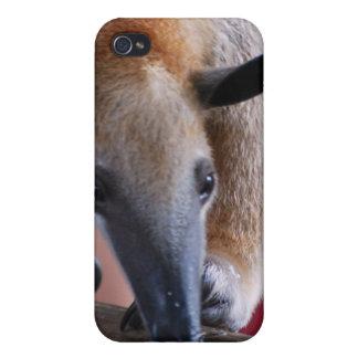 Lesser Anteater  iPhone 4 Case
