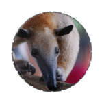 Lesser Anteater Jelly Belly Tins