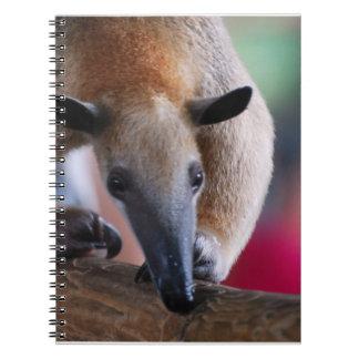 Lesser Anteater Notebook