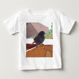 Lesser Antillean Bullfinch Baby T-Shirt