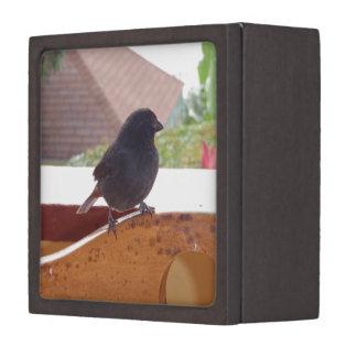 Lesser Antillean Bullfinch Jewelry Box