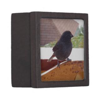 Lesser Antillean Bullfinch Keepsake Box