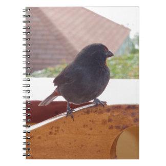 Lesser Antillean Bullfinch Spiral Note Book