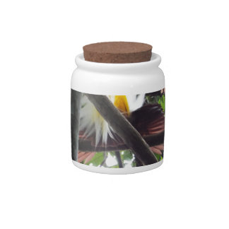 Lesser Birds of Paradise from Tropical Rainforest Candy Jar