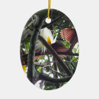Lesser Birds of Paradise from Tropical Rainforest Ceramic Ornament