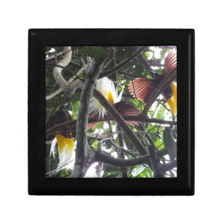 Lesser Birds of Paradise from Tropical Rainforest Keepsake Box