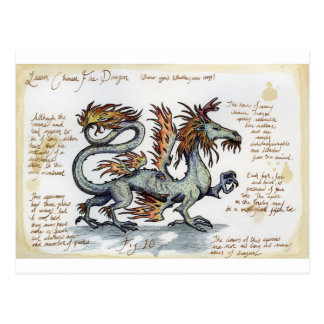Lesser Chinese Fire Dragon Postcard