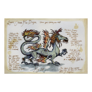 Lesser Chinese Fire Dragon Poster