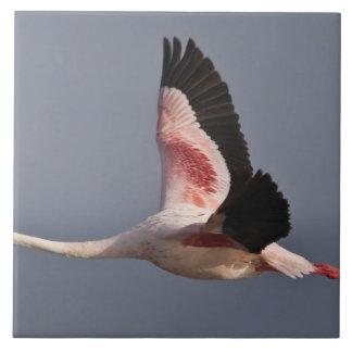 Lesser Flamingo at Lake Nakuru NP, Kenya. Ceramic Tile