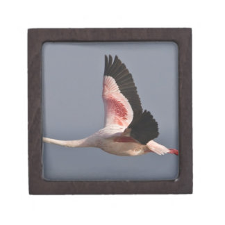 Lesser Flamingo at Lake Nakuru NP, Kenya. Gift Box