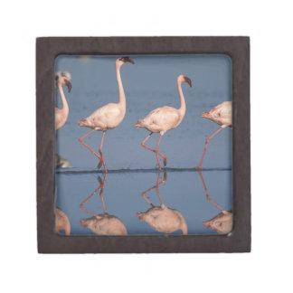 Lesser Flamingo, (Phoenicopterus minor), Keepsake Box