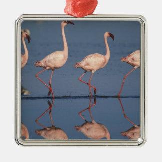 Lesser Flamingo Phoenicopterus minor Ornament