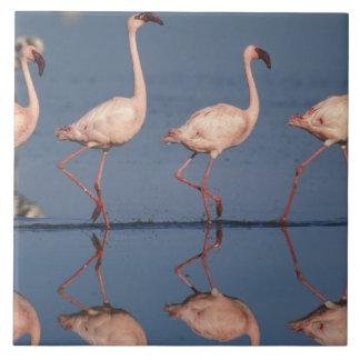 Lesser Flamingo, (Phoenicopterus minor), Tile