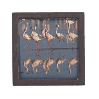 Lesser Flamingos displaying, Lake Nakuru Keepsake Box