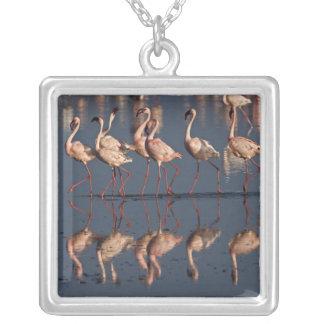 Lesser Flamingos displaying, Lake Nakuru Necklaces