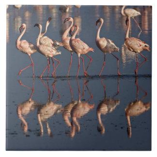 Lesser Flamingos displaying, Lake Nakuru Tile