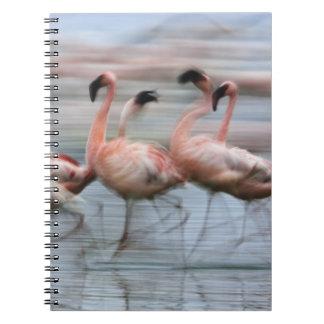 Lesser Flamingos in motion, Phoenicopterus Notebook