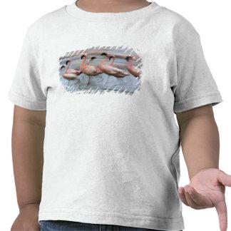 Lesser Flamingos in motion Phoenicopterus T-shirt