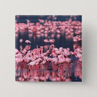 Lesser Flamingos (Phoeniconaias minor), Africa, Button