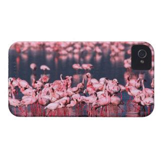 Lesser Flamingos (Phoeniconaias minor), Africa, iPhone 4 Cases