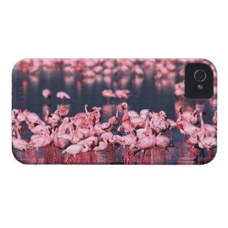 Lesser Flamingos (Phoeniconaias minor), Africa, iPhone 4 Case-Mate Cases