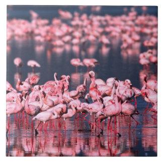 Lesser Flamingos (Phoeniconaias minor), Africa, Ceramic Tile