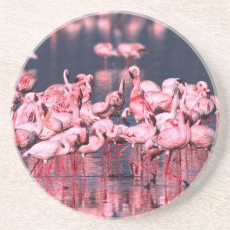 Lesser Flamingos (Phoeniconaias minor), Africa, Coaster