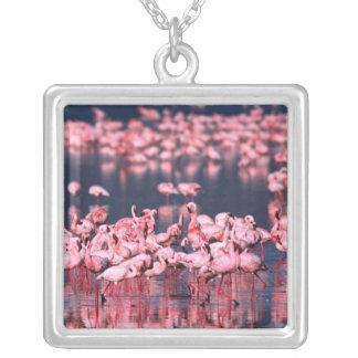 Lesser Flamingos (Phoeniconaias minor), Africa, Pendants