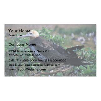 Lesser frigatebird perching on branch business cards