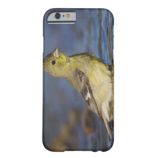Lesser Goldfinch, Carduelis psaltria, female Barely There iPhone 6 Case
