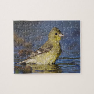 Lesser Goldfinch, Carduelis psaltria, female Jigsaw Puzzle