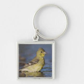 Lesser Goldfinch, Carduelis psaltria, female Keychain