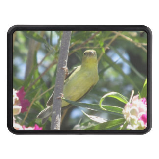 Lesser Goldfinch Hitch Cover
