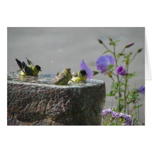 Lesser Goldfinches in Birdbath Card