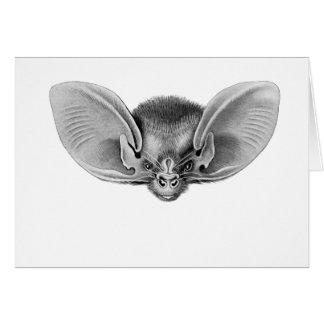 Lesser Long-eared Bat Card