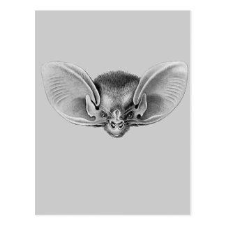 Lesser Long-eared Bat Postcard