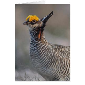 Lesser Prairie Chicken Greeting Card