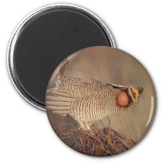 Lesser Prairie Chicken lek Milnesand, New Mexico Refrigerator Magnets
