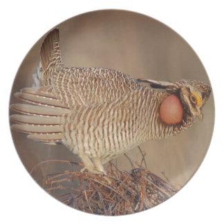 Lesser Prairie Chicken lek Milnesand, New Mexico Plate