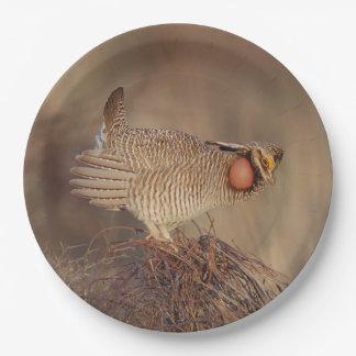 Lesser Prairie Chicken lek Milnesand, New Mexico 9 Inch Paper Plate