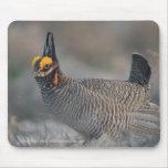Lesser Prairie Chicken Mouse Pad