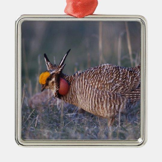 Lesser Prairie-Chicken, Tympanuchus Metal Ornament